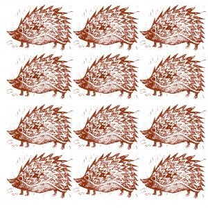 greetings card, birthday card, hedgehog, jane adams