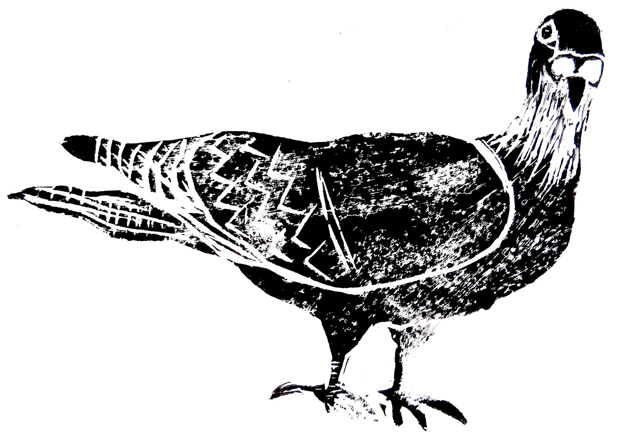 Side pigeon jane adams ceramics card greetings card birthday card pigeoon linocut bookmarktalkfo Images