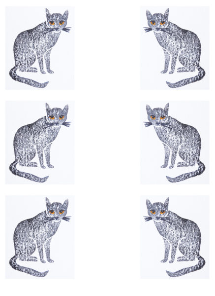 taabby cat, cards, card, greetings cards, birthday cards, cat cards, jane adams