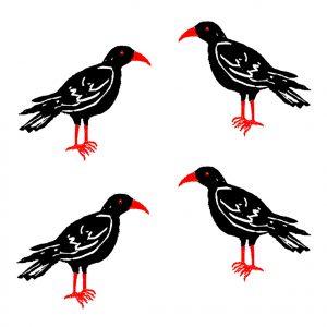 card, cards, greetings cards, birthday card, choughs, cornish choughs, chough, bird, linocut, jane adams